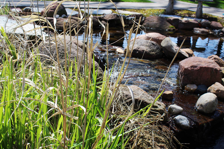 Grasses planted by a water feature created by Tennant Lawn Service