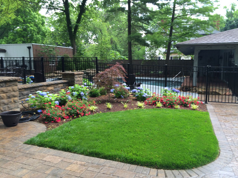 Hydrangeas and roses surround a green oasis in this St. Louis backyard