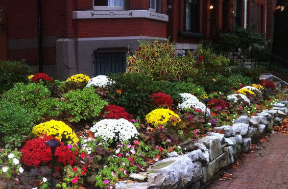 Tennant Lawn Service provides ongoing landscape maintenance at this St. Louis home